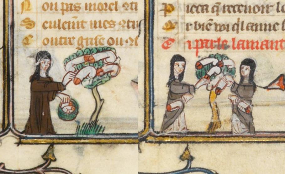 Vrăjitoare medievale culegând penisuri din copaci