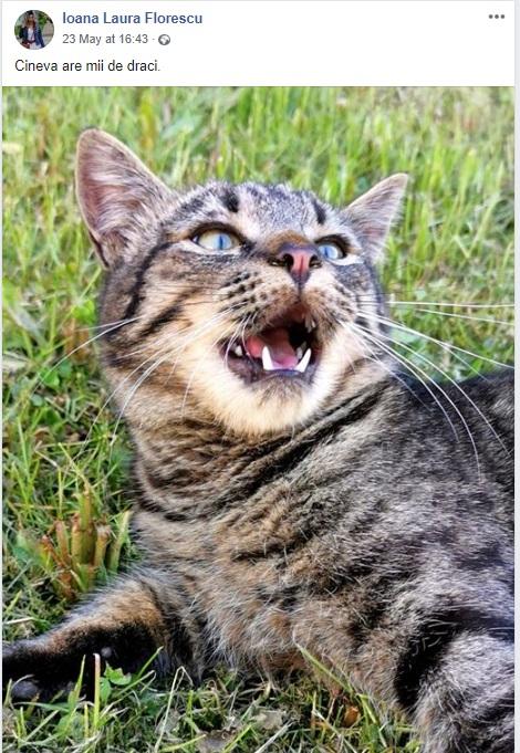 """Poză cu un pisic supărat - """"Cineva are mii de draci."""""""